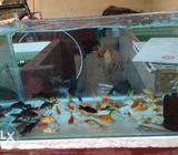 Gold fish 10rs for above 5 Qty. ballon mora 15rs