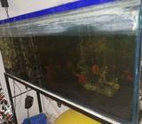 Aquarium 4feet with 9 0 3 2 7 All accessories 6 8 9 1 0