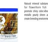 Flowerhorn fish mineral maker Rs 300