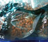 Flowerhorn fish original food okiko platinum available
